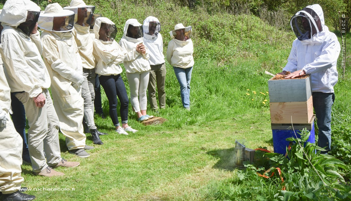 page : incription stage d'apiculture naturelle en Normandie - Intervention sur une ruche Warré