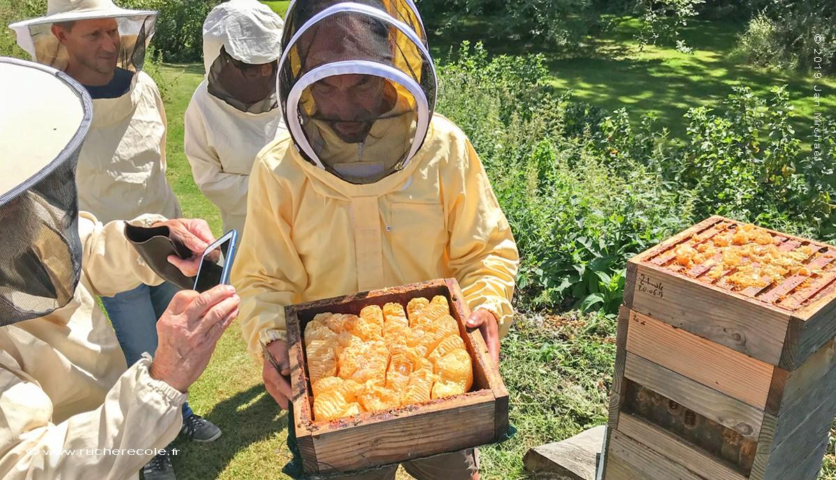 recolte du miel