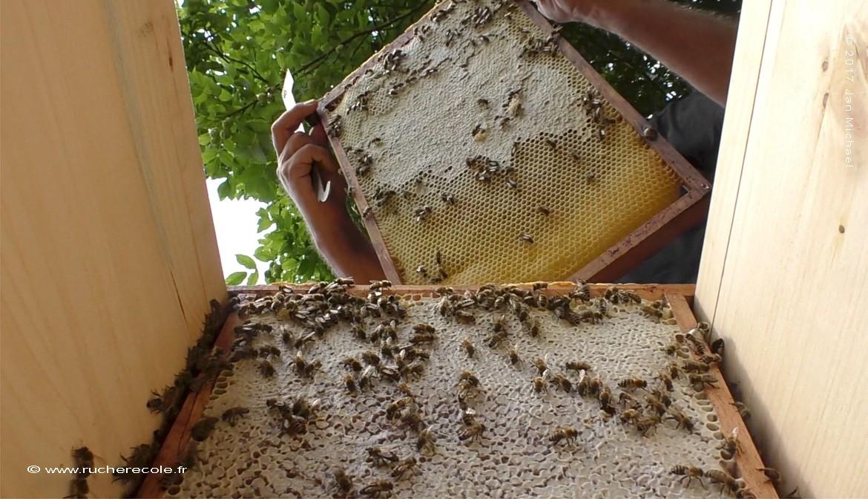 La ruche Mellifera