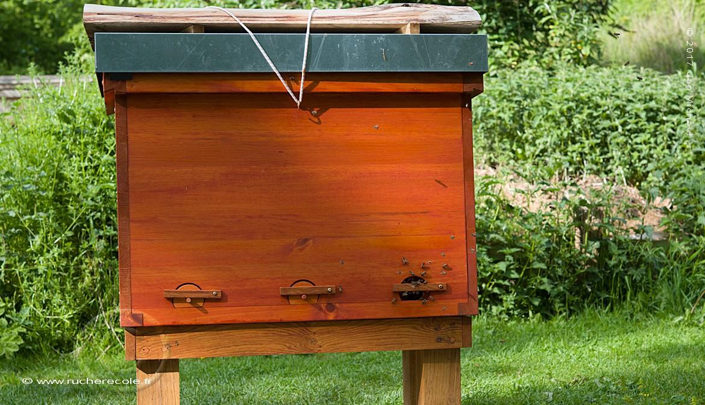 La ruche Mellifera - Einraumbeute