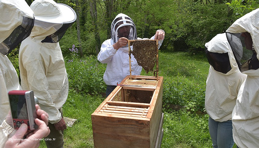 Nos stages d'apiculture naturelle en Normandie